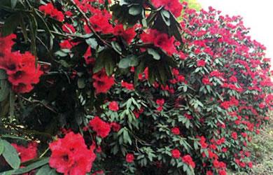 季節折々の草花