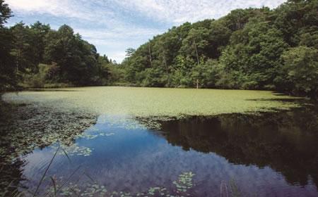 鯉ヶ窪湿原